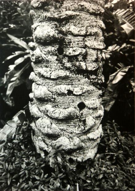 木の幹に銃痕?
