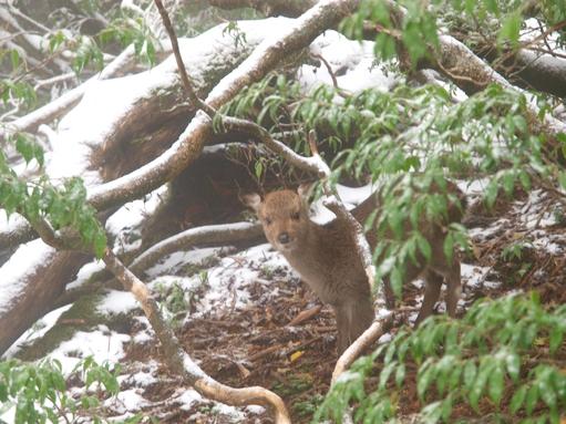 屋久島紀行(22) -屋久島に雪が降っている-