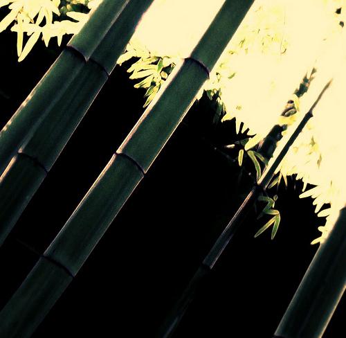 竹飯の作り方をマスターしてサバイバル能力を増強!