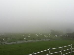 梅雨時のトカラ列島訪問はジメジメ。でも緑がキレイです。