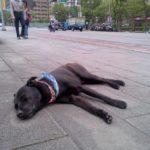 臺灣には犬がたくさん歩いている